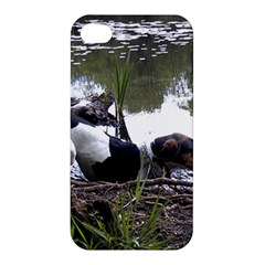 Treeing Walker Coonhound In Water Apple iPhone 4/4S Premium Hardshell Case