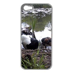 Treeing Walker Coonhound In Water Apple iPhone 5 Case (Silver)