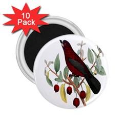 Bird On Branch Illustration 2 25  Magnets (10 Pack)