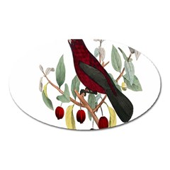 Bird On Branch Illustration Oval Magnet