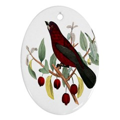 Bird On Branch Illustration Oval Ornament (two Sides)