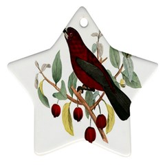 Bird On Branch Illustration Star Ornament (two Sides)