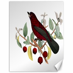 Bird On Branch Illustration Canvas 12  X 16