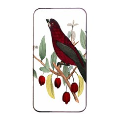 Bird On Branch Illustration Apple iPhone 4/4s Seamless Case (Black)
