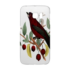 Bird On Branch Illustration Galaxy S6 Edge