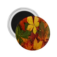 Colorful Autumn Leaves Leaf Background 2 25  Magnets