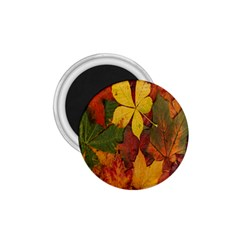 Colorful Autumn Leaves Leaf Background 1 75  Magnets