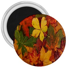 Colorful Autumn Leaves Leaf Background 3  Magnets