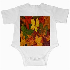 Colorful Autumn Leaves Leaf Background Infant Creepers
