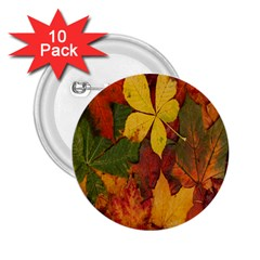 Colorful Autumn Leaves Leaf Background 2 25  Buttons (10 Pack)