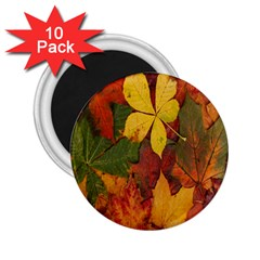 Colorful Autumn Leaves Leaf Background 2 25  Magnets (10 Pack)