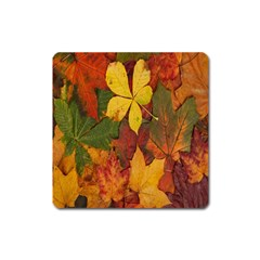 Colorful Autumn Leaves Leaf Background Square Magnet
