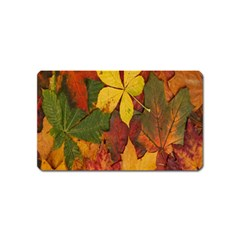 Colorful Autumn Leaves Leaf Background Magnet (name Card)