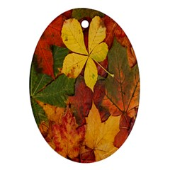 Colorful Autumn Leaves Leaf Background Oval Ornament (two Sides)