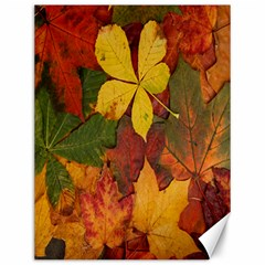 Colorful Autumn Leaves Leaf Background Canvas 12  X 16