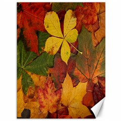 Colorful Autumn Leaves Leaf Background Canvas 36  X 48