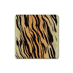 Tiger Animal Print A Completely Seamless Tile Able Background Design Pattern Square Magnet