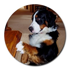 Bernese Mountain Dog Begging Round Mousepads
