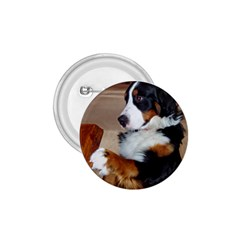 Bernese Mountain Dog Begging 1.75  Buttons