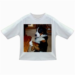 Bernese Mountain Dog Begging Infant/Toddler T-Shirts