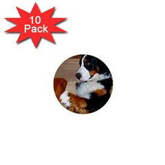Bernese Mountain Dog Begging 1  Mini Buttons (10 pack)