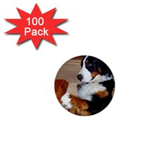 Bernese Mountain Dog Begging 1  Mini Buttons (100 pack)