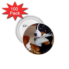 Bernese Mountain Dog Begging 1.75  Buttons (100 pack)