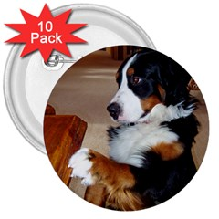 Bernese Mountain Dog Begging 3  Buttons (10 pack)