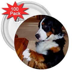 Bernese Mountain Dog Begging 3  Buttons (100 pack)