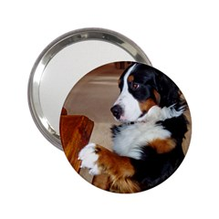 Bernese Mountain Dog Begging 2.25  Handbag Mirrors