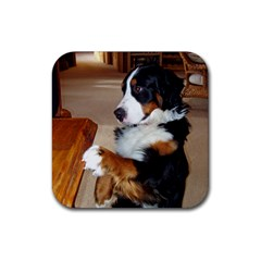 Bernese Mountain Dog Begging Rubber Square Coaster (4 pack)