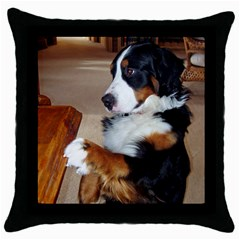 Bernese Mountain Dog Begging Throw Pillow Case (Black)