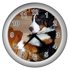 Bernese Mountain Dog Begging Wall Clocks (Silver)