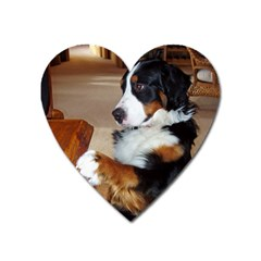 Bernese Mountain Dog Begging Heart Magnet