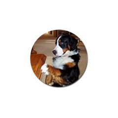Bernese Mountain Dog Begging Golf Ball Marker