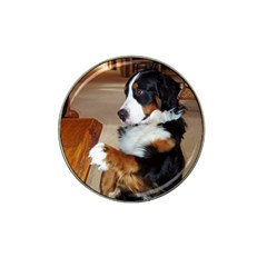 Bernese Mountain Dog Begging Hat Clip Ball Marker (10 pack)