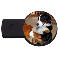 Bernese Mountain Dog Begging USB Flash Drive Round (4 GB)