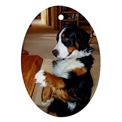 Bernese Mountain Dog Begging Oval Ornament (Two Sides)