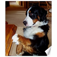 Bernese Mountain Dog Begging Canvas 8  x 10