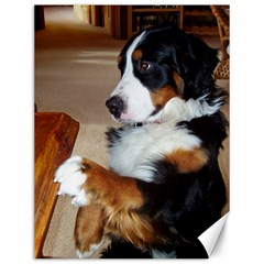 Bernese Mountain Dog Begging Canvas 12  x 16