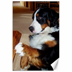 Bernese Mountain Dog Begging Canvas 24  x 36