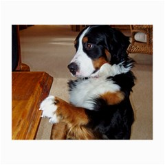 Bernese Mountain Dog Begging Small Glasses Cloth (2-Side)