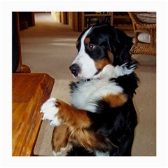 Bernese Mountain Dog Begging Medium Glasses Cloth