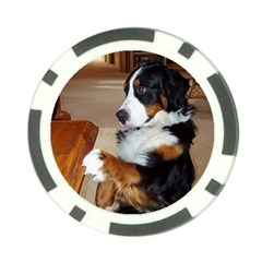 Bernese Mountain Dog Begging Poker Chip Card Guard