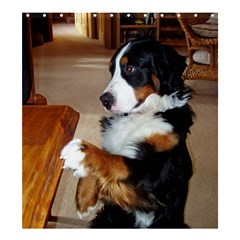 Bernese Mountain Dog Begging Shower Curtain 66  x 72  (Large)