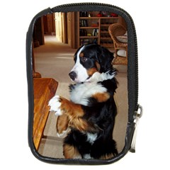 Bernese Mountain Dog Begging Compact Camera Cases