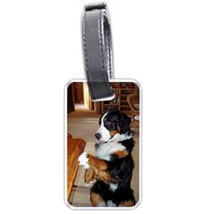 Bernese Mountain Dog Begging Luggage Tags (One Side)