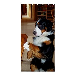 Bernese Mountain Dog Begging Shower Curtain 36  x 72  (Stall)