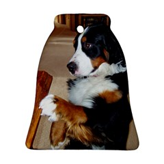 Bernese Mountain Dog Begging Ornament (Bell)