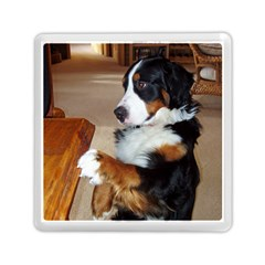 Bernese Mountain Dog Begging Memory Card Reader (Square)